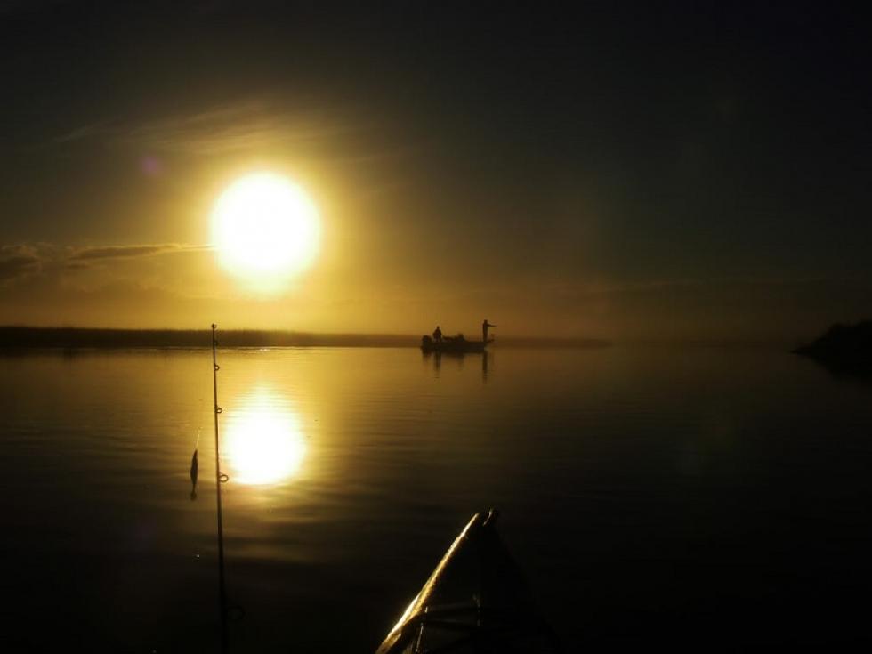 Foggy Morning Pics