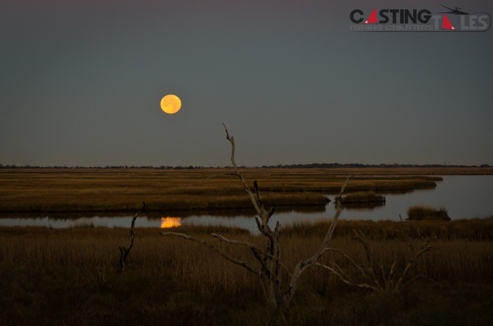 Photo of the Week…Full Moon