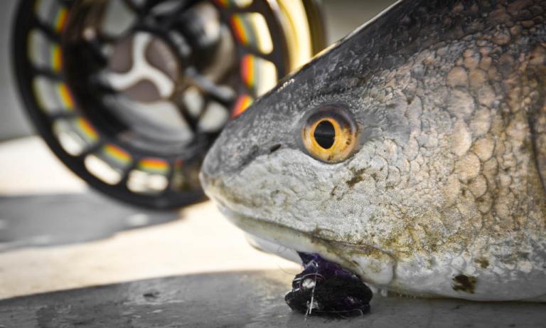 Galveston Redfish Fly Reel